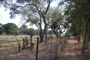 Walk the fence and see animals on safari in Africa