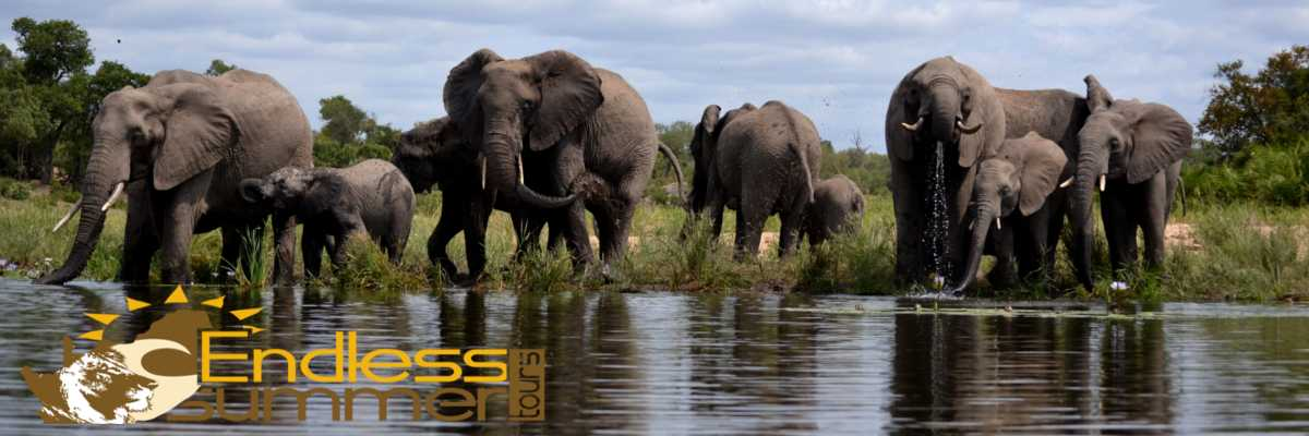 Day, Overnight South African Safari Tours | Kruger, Hluhluwe, St  Lucia