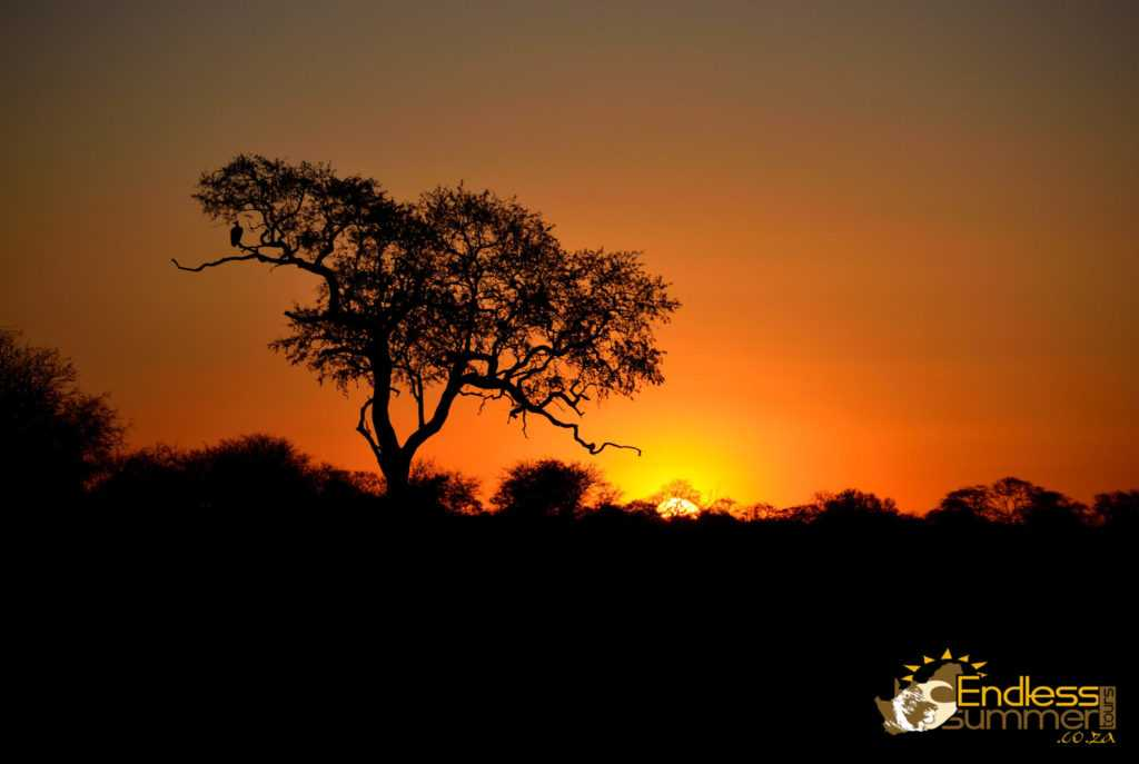 The sunset on another day in the Kruger Park
