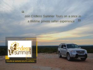 Endless Summer Tours Brochure